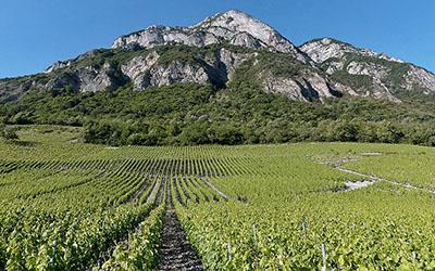 producteurs, agriculteurs, vins, produits de savoie